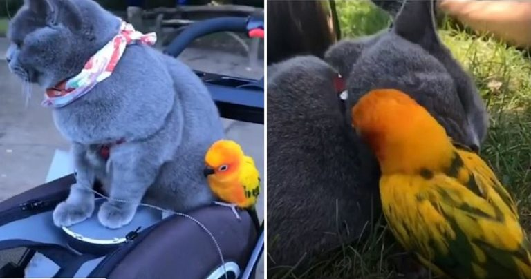 Cat Becomes Best Friends With Parrot And Their Bond Is Inseparable
