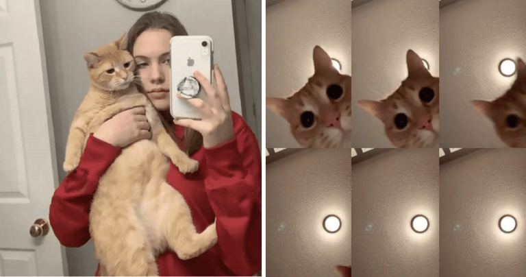 Video Of Cat Dancing To 'Mr Sandman' Could Be The Most Successful TikTok Ever