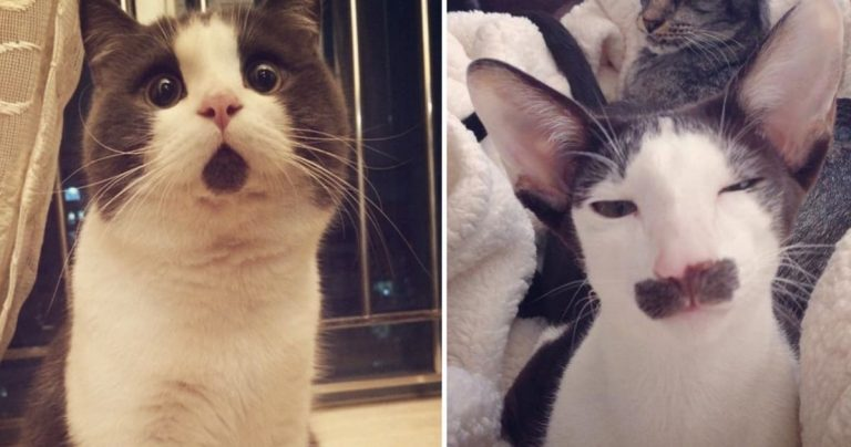 10+ Cats Who Don't Even Look Real