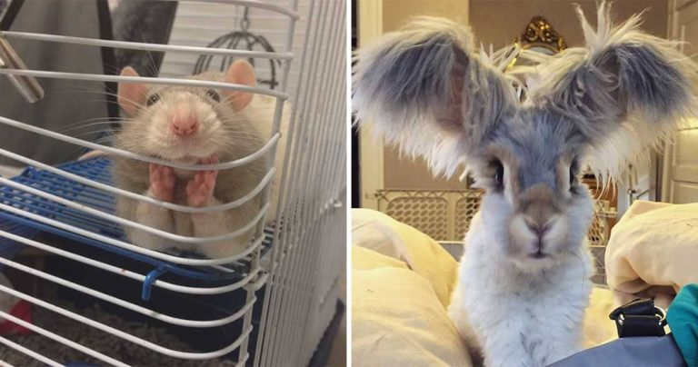 "10+ Cute Animals That Will Break Down Your ""Aww-meter"""