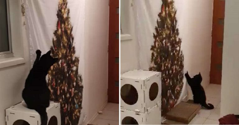 """Confused Cat Doesn't Know Why She Can't Knock Down """"Christmas Tree"""""""