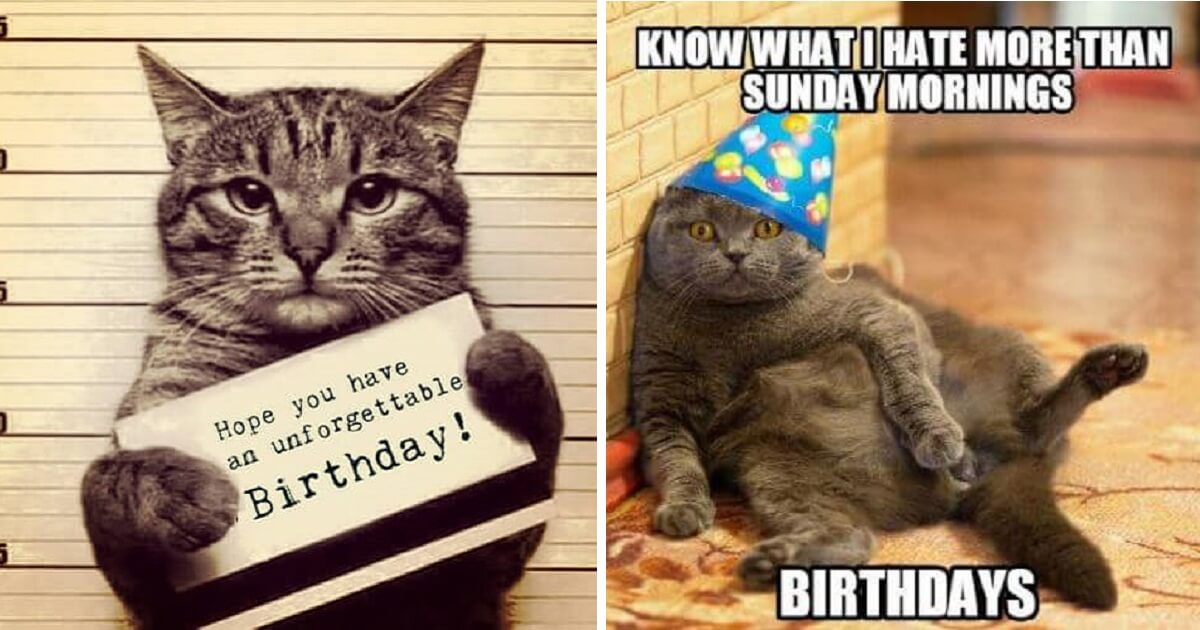 Incredible 10 Adorable Happy Birthday Cat Memes For A Perfect Birthday Wish Personalised Birthday Cards Epsylily Jamesorg