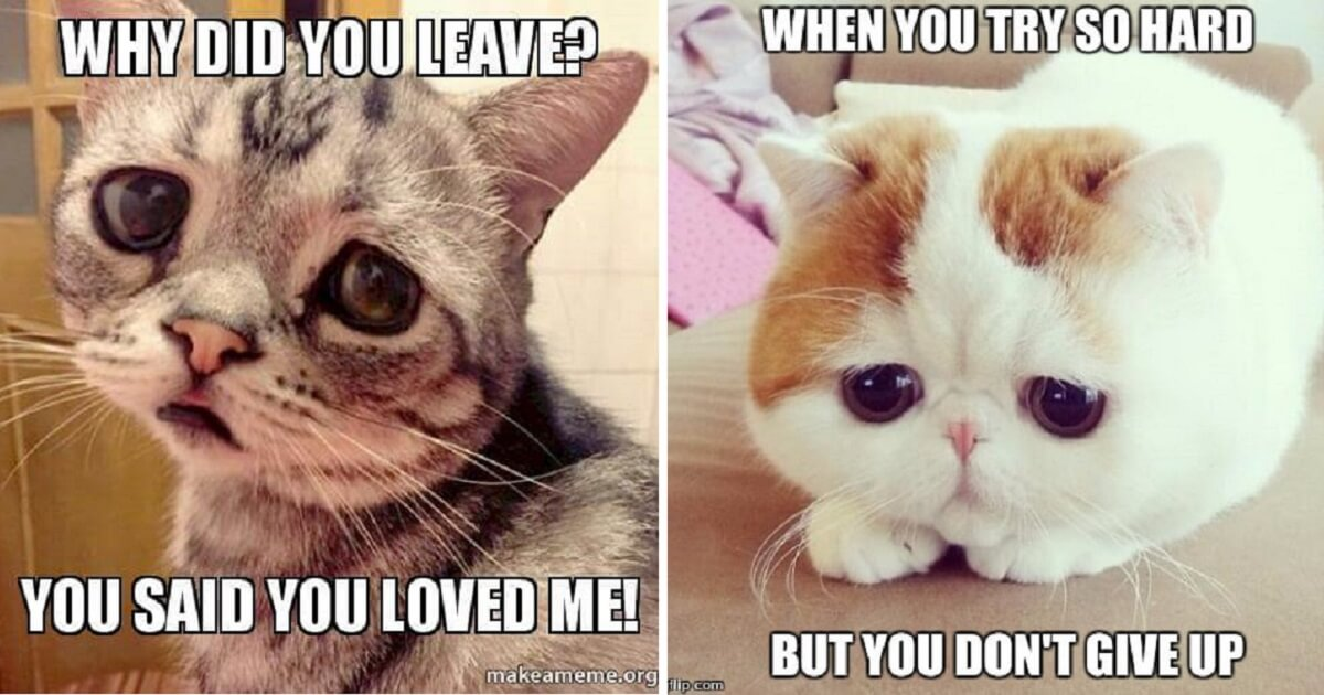 20 Sad Cat Memes That Are Too Cute For Words - Cats My Life